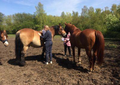 Hos hestene